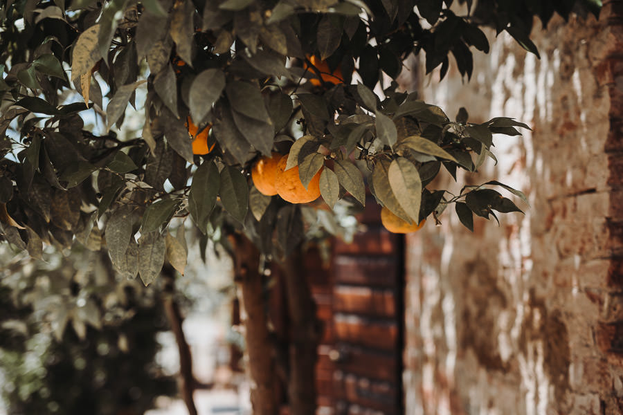 Hochzeitslocation mit Orangenbäumen